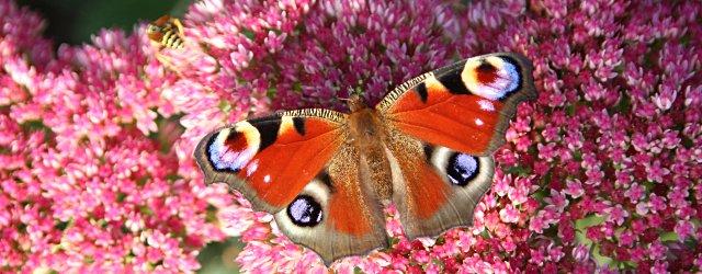 Schmetterlingslehrpfad im Naturpark Geschriebenstein