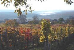 Weinidylle am Csaterberg in der Gemeinde Kohfidisch