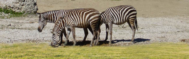 Doppelmayr Zoo