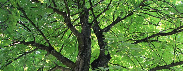 Waldgarten Gurk