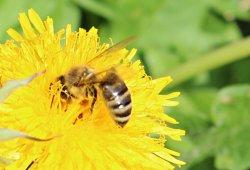 St. Andräer Bienenlehrpfad