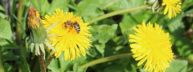 St. Andräer Bienenlehrpfad / Lavanttal
