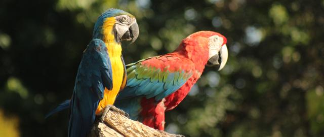 Papageien im Vogelpark Turnersee
