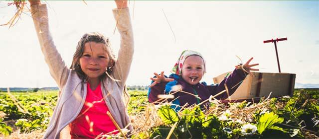 Kinderspaß im Steinfelder Erdbeerland