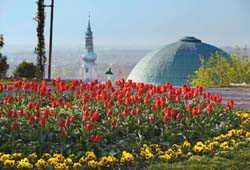 Blumen in Baden