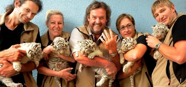 Tiger Fünflinge im Weißen Zoo in Kernhof
