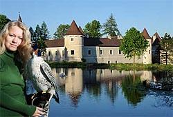 /niederoesterreich/zwettl/tierpark-freizeitpark/falknerei-greifvogelzentrum-schloss-waldreichs