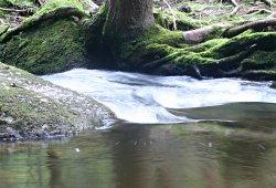 /niederoesterreich/gmuend/natur/naturpark-nordwald-bad-grosspertholz