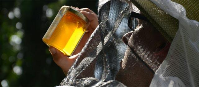Imker mit Honig am Bienenhof Attersee