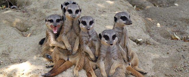 Kindergeburtstag im Zoo Linz