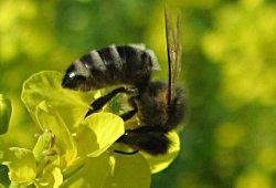 Bienen-Erlebnisweg Zwettl, Rodl