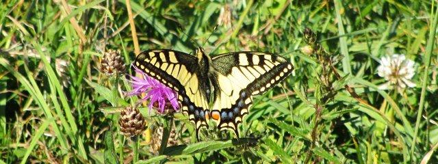 Schmetterlingslehrweg Uttendorf