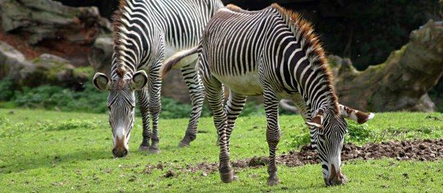 Zoo Salzburg Sommerferien