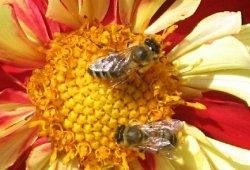 Passail Bienenlehrpfad