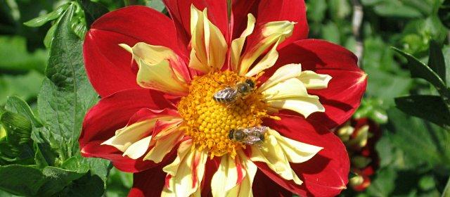 Passail Wald- und Bienenlehrpfad