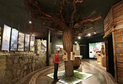 /tirol/landeck/museum-burgen/naturpark-kaunergrat-naturparkhaus-fliess