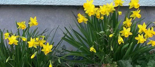 Ostern in den Blumengärten Hirschstetten in Wien