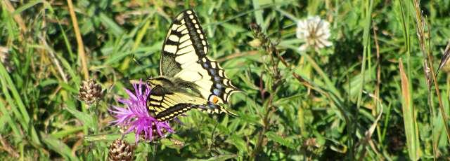Schmetterlingspfad in Wien