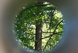 /wien/wien-13/natur/lehrpfade-lainzer-tiergarten