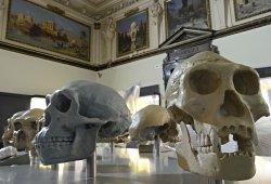 /wien/wien-1/schule/naturhistorisches-museum-wien-schulprogramm