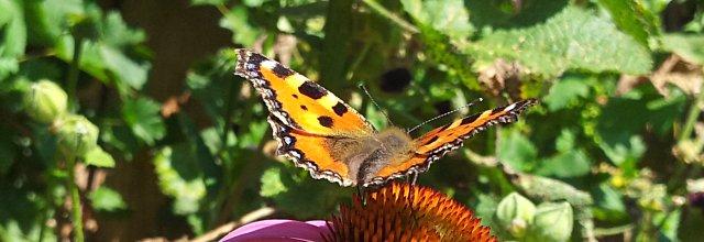 Schmetterlingshaus im Wiener Burggarten